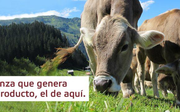 Raza Pirenaica, el vacuno autóctono de Navarra